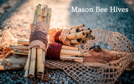 Mason Bee Hives